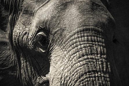 Die Tierwelt Afrikas