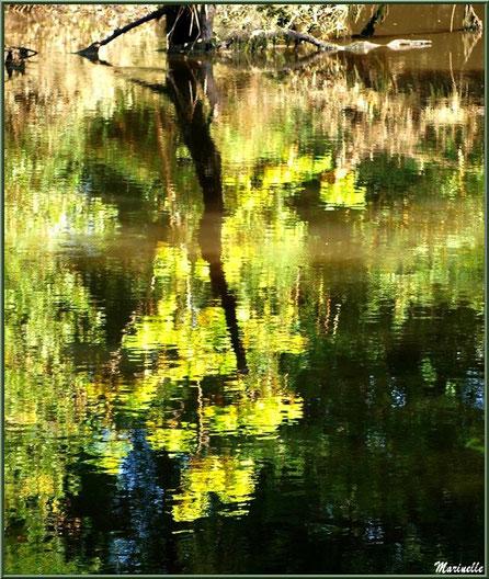 Arbres et reflets d'automne en bordure de La Leyre, Sentier du Littoral au lieu-dit Lamothe, Le Teich, Bassin d'Arcachon (33)