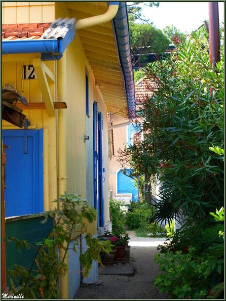 Maisons et ruelle verdoyante, Village de L'Herbe, Bassin d'Arcachon (33)