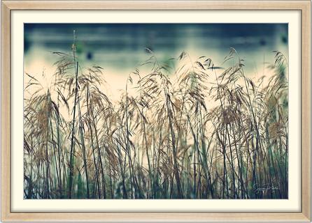"""""""SCHILF"""" (limitierte Auflage; Innenmaß: 60 x 40 cm; Rahmen gold gebürstet)"""