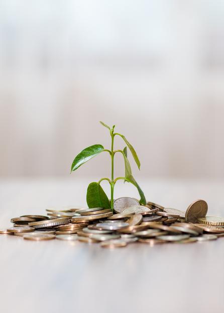 Einkommensabsicherung - Pflanze