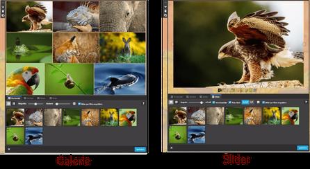 Screenshot Jimdo Creator Galerie-Widget