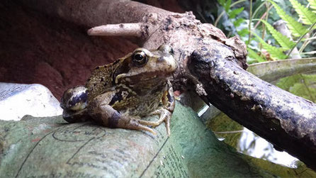 羅伯在溫室裡的青蛙朋友