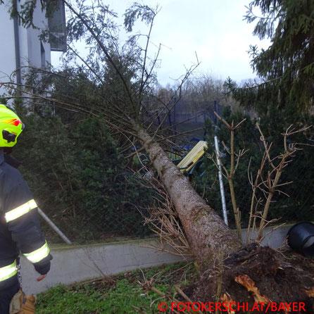 Feuerwehr; Blaulicht; Fotokerschi.at; Sturm Bianca; Baum;