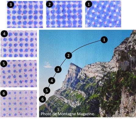Observations au microscope de cyan plus ou moins saturées