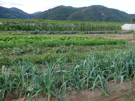 ミモレ農園のお野菜