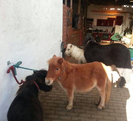 Die kleine Ponyfarm