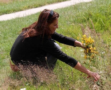 Une cueillette du millepertuis au mois de juillet dans un parc urbain
