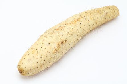長芋丸ごと一本