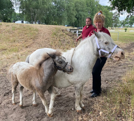 Doreen Fricke aus Dörnitz mit ihrem Championatsfohlen. Foto: Alpha-Report