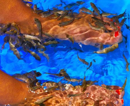 АиФ Европа: Пяткой в аквариум. Фото: Богдан Кондрашин