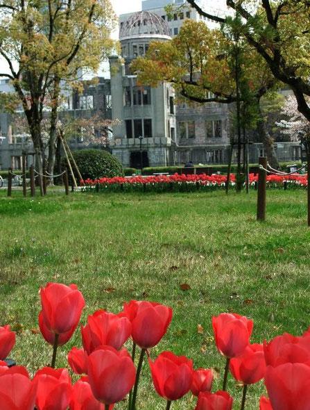 Les tulipes du Parc de la Paix