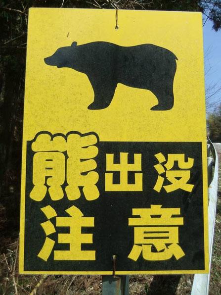 Attention aux ours noirs des montagnes