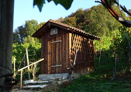 im Schmelzler, dem ältesten Weingut Weinfeldens