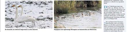 Zürichsee- Zeitung v. 15.2.2012
