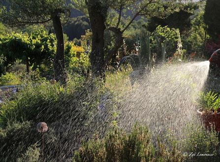 arrosage du jardin en Provence