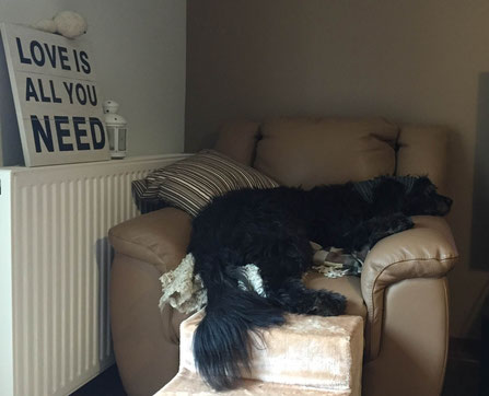Leeloo auf Josselin'es Sofa :-) .....