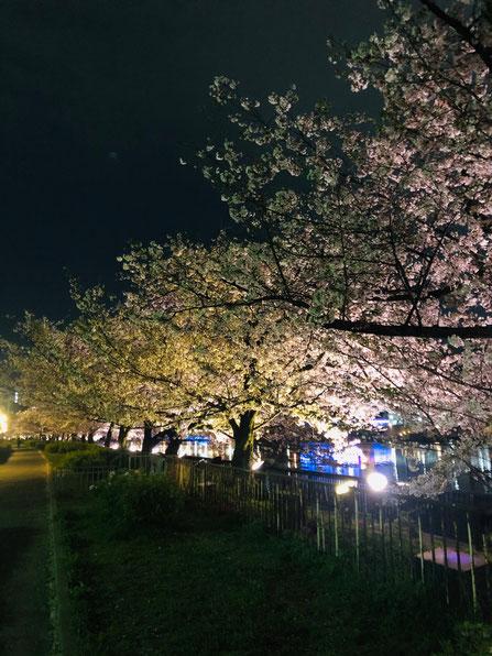 2021夜桜_大阪