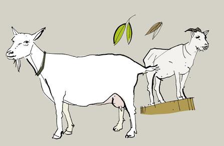 Zwei Ziegen essen Blätter