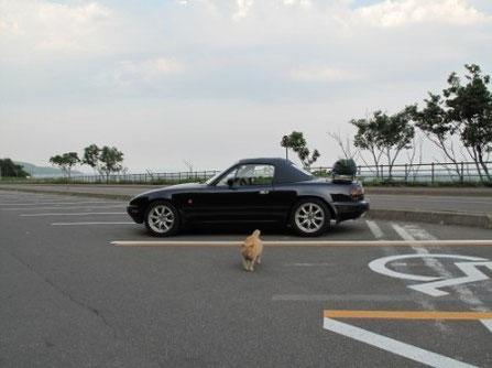 在りし日のノラ(昨年6月撮影) ウィキペディアにものる位有名な猫だった。