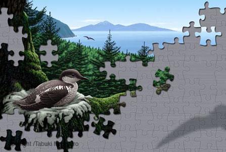 マダラウミスズメのイラスト,野鳥