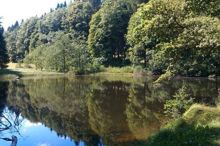 Bild: Wünschendorf Erzgebirge Bornwald Schwarzer Teich