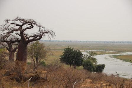 la rivière Chobe