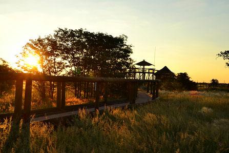 Etosha - Olifantsrus Camp