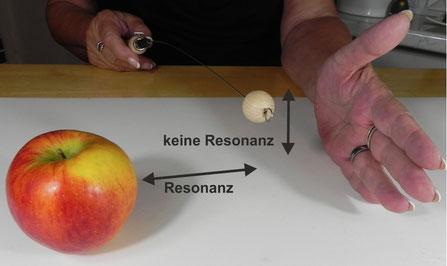 Hier ist ein Beziehungstest / Resonanztest mit der Energierute und einem Apfel zu sehen.
