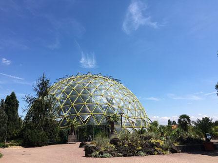 Janett mag den Botanischen Garten an der Düsseldorfer Uni - (C) Teilzeitreisender.de