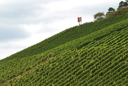 Weinberg in Franken. Hier gedeiht der Spargelwein Silvaner