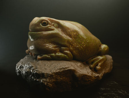Sculpting study of an Australian tree frog (litoria)
