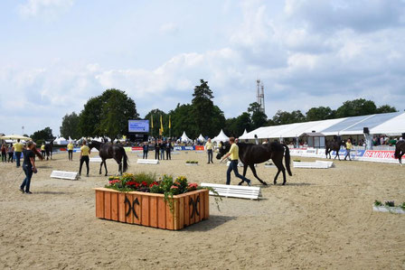 Hannover's best three-year-old mares are presented at the Herwart von der Decken-Show on August 6th.