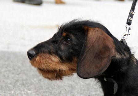 Bruno - 4 Monate alt