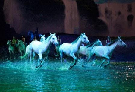 chevaux-en-liberté-en-spectacle