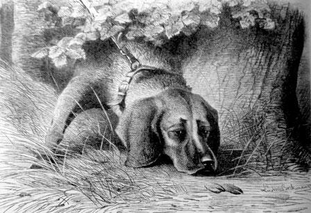"""Solo"", Leithundtyp des Schweißhundes der Solinger Rasse. (L.Beckmann, 1894) aus Enzyklopädie der Jagdhunde"