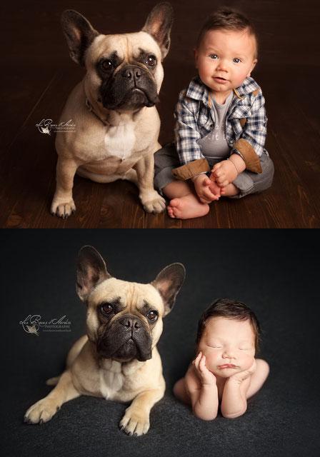 Photo chien bouledogue et bébé nouveau-né photographe PACA VAR