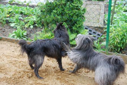 auch im Garten macht gemeinsam Spielen Spass