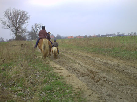 Pferde beim Ausritt