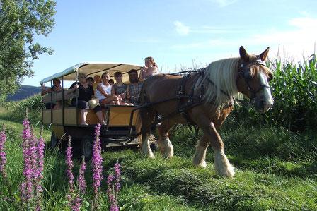 Crédit photo Ferme d'En Gout, balade à cheval, dormir en roulotte, balade en chariot en famille, activité tourisme et handicap, office de tourisme Terres d'Autan-Montagne Noire, que faire à Dourgne, que faire à Puylaurens, randonnée équestre