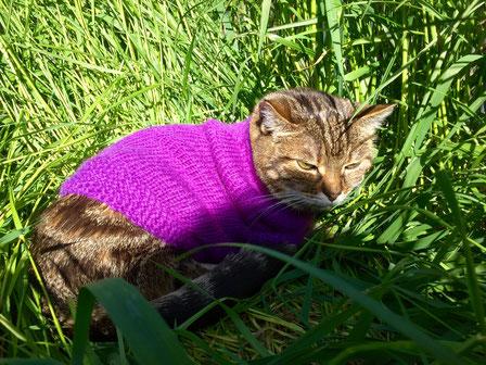 Bild: Katze Ronja mit Pullover im Gras