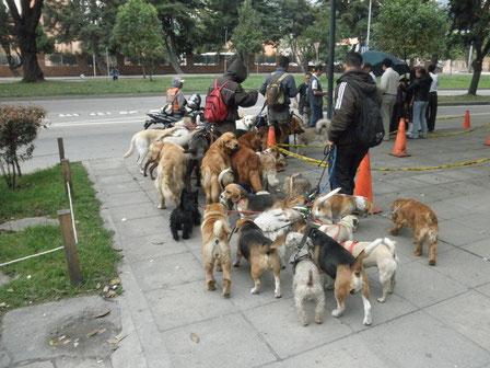 Paseadores en CIUDAD DE BOGOTÁ, Colombia.