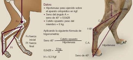 Pincha y accede a REHABILITACIÓN CANINA