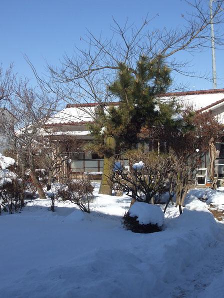 積雪、25センチ位