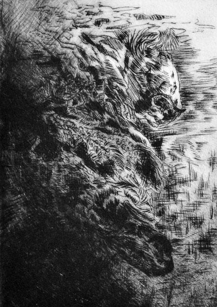 Reißend • 2019 • Kaltnadelradierung • Engraving print on paper • 39 x 26,5 cm