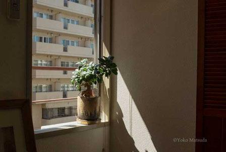 窓辺 写真教室