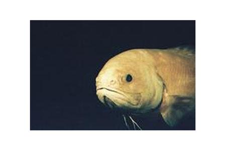 潜水調査船がみた深海生物
