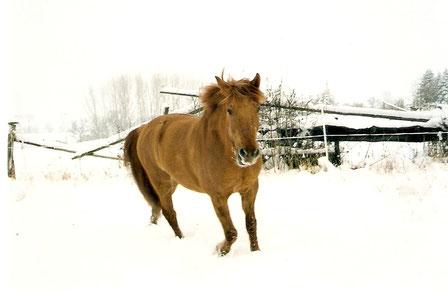 ...jetzt ist wieder einmal Winter, ich bin schon 11 Jahre alt und Schnee ist immer noch schön