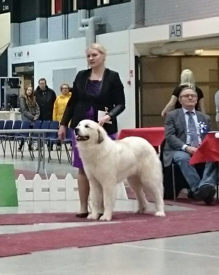 Echo de'Chien Carmen almost 3 years old in Lahti International show