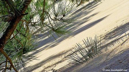 Allmählich verschwindet die Kiefer unter dem Sand